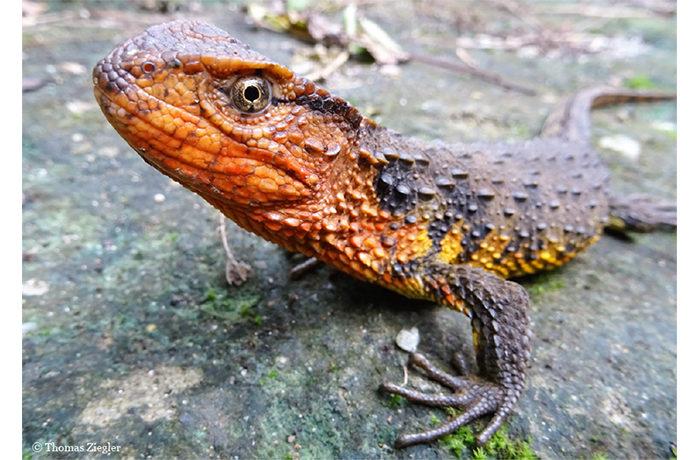メコン川流域の新種115種、多くが絶滅の危機 WWF