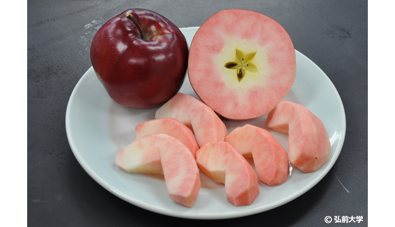 【季節の果物図鑑】冬の果物といえば…中まで赤いリンゴ