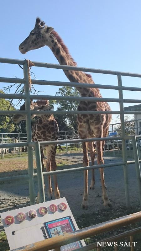 地震から1年8カ月 熊本市動植物園の今