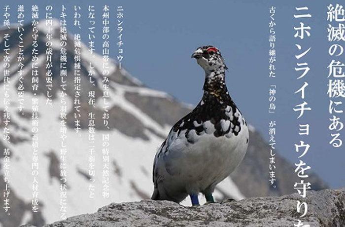 ライチョウを守るクラウドファンディング始動 富山市ファミリーパーク