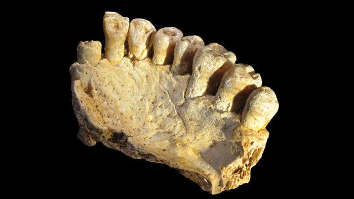 現生人類の「出アフリカ」、12万年前よりも早かった