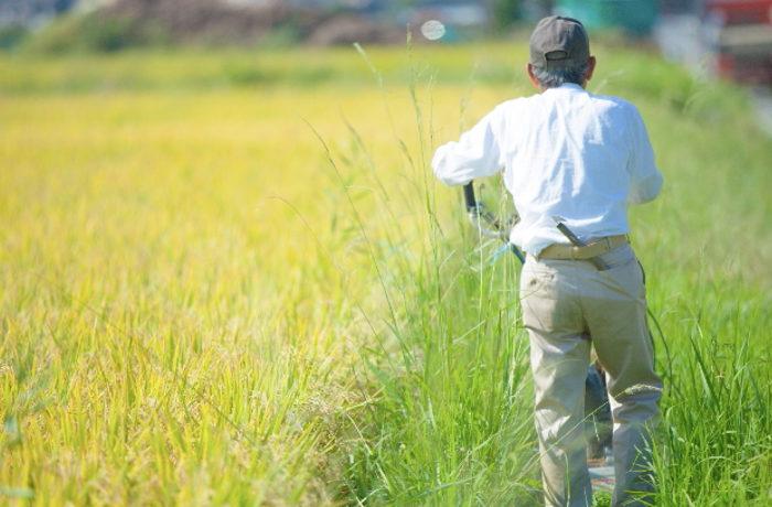 野生鳥獣の農作物被害状況 前年度より減少