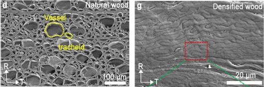 木材の強度が10倍になる方法を開発 実用化に期待大