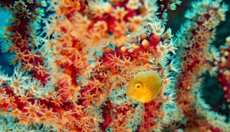 今年は国際サンゴ礁年 サンゴ礁を守るために必要なこと