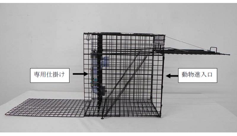 アライグマ専用捕獲機を開発 急増する農作物被害などに対応