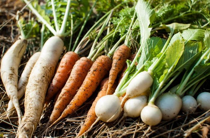 野菜高騰 根菜類は回復傾向も、葉物は3月いっぱい高値が続く