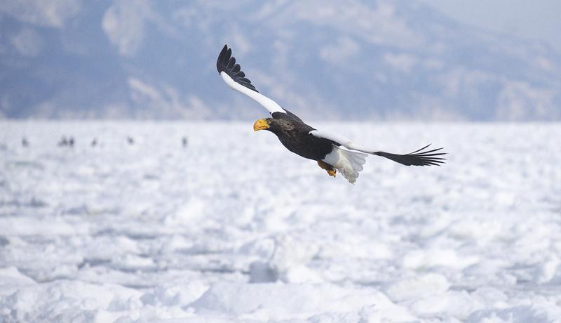 地球温暖化、35地域で半数の生物が絶滅の危機 WWFが警鐘