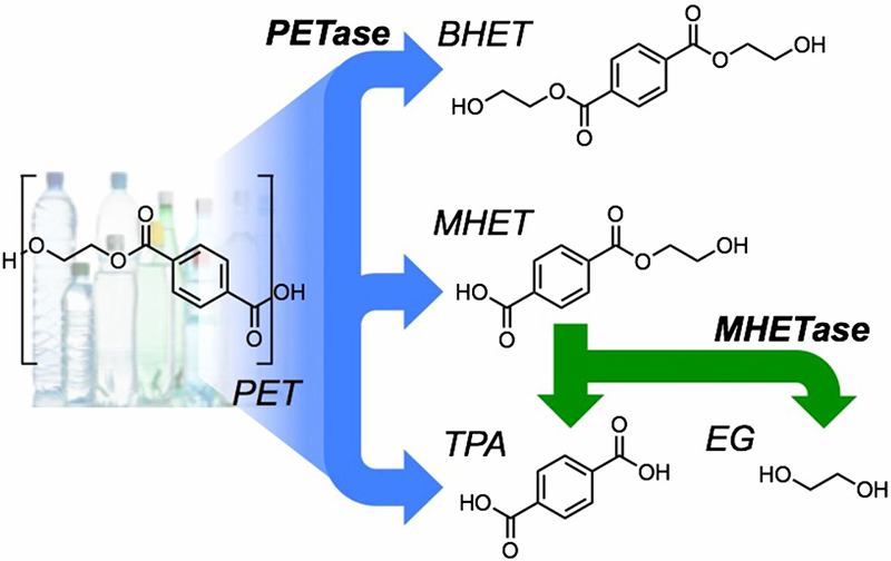 PET分解酵素の立体構造解明で、プラスチックゴミ問題に光