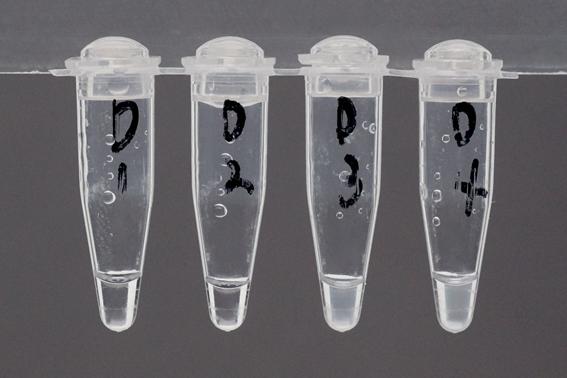 ヒアリ簡易検出キットで早期防除 国立環境研究所が開発