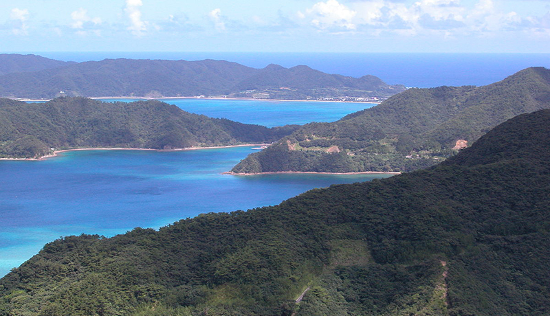 WWF、南西諸島の固有種ペット取引に警告 絶滅危惧種も