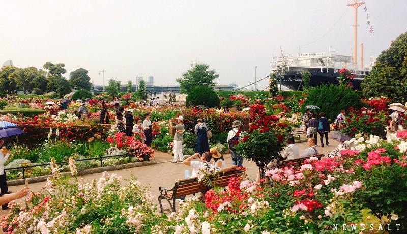 「ガーデンネックレス横浜2018」開催中 山下公園でバラが見頃
