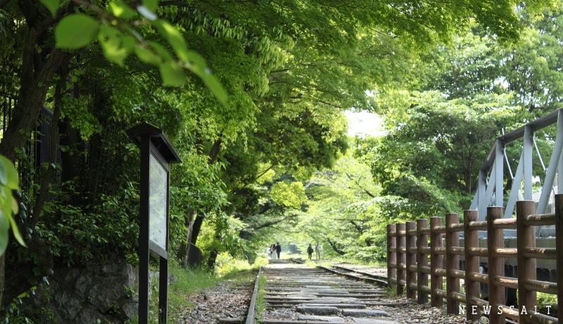 満開のツツジと新緑 京都・蹴上で楽しむ初夏