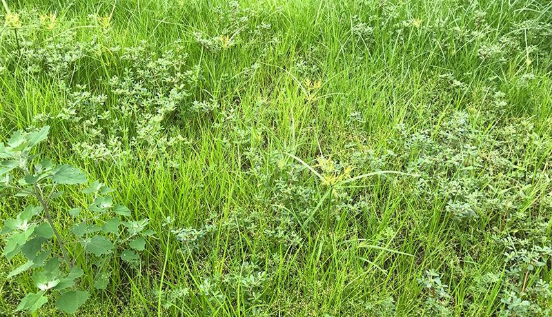 耕作放棄地が生物多様性に貢献か? 湿地・草地性の鳥類の生息を確認