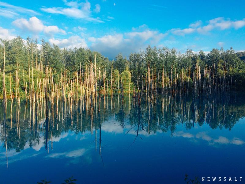 美瑛 「白金青い池」の神秘的なコバルトブルー