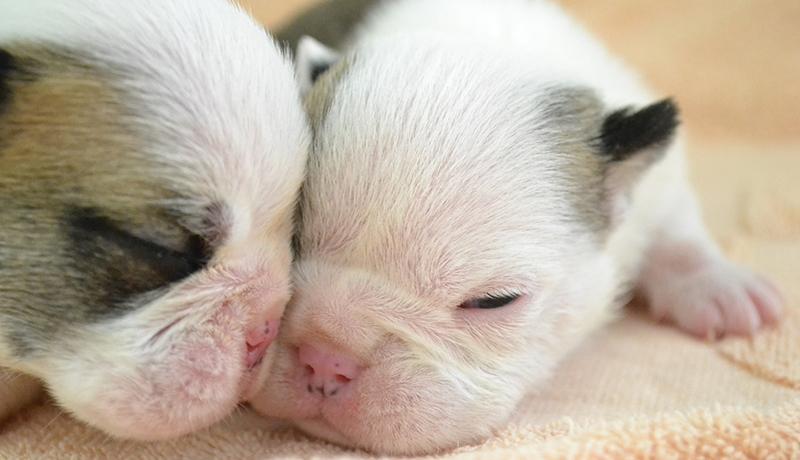 悪質ペット業者を排除へ 英国で子犬と子猫の販売を禁止