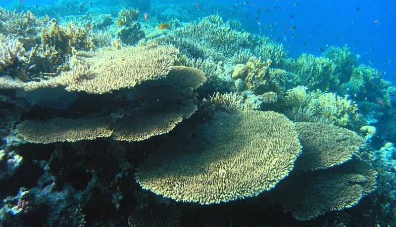 CO2の増加により海洋生態系の多様化が減少