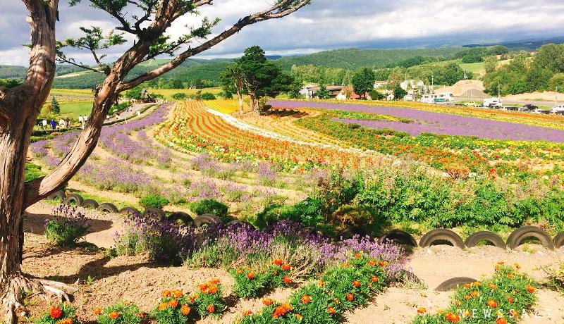 色鮮やかな夏の北海道・美瑛