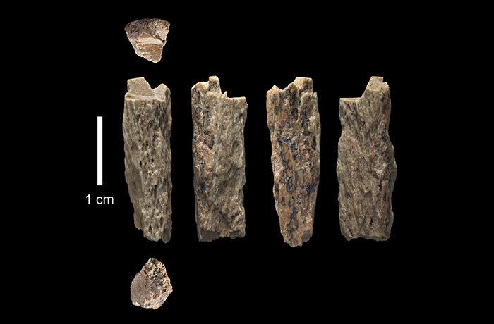 約9万年前の骨片から、ネアンデルタール人とデニソワ人の異種交配を特定