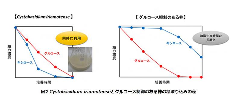 バイオマス由来の油脂生産を効率化 低炭素社会の実現に期待