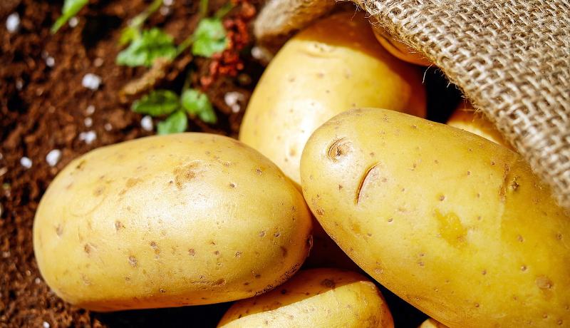 ゲノム編集ツールを開発し、もちもちしたジャガイモの作出に成功