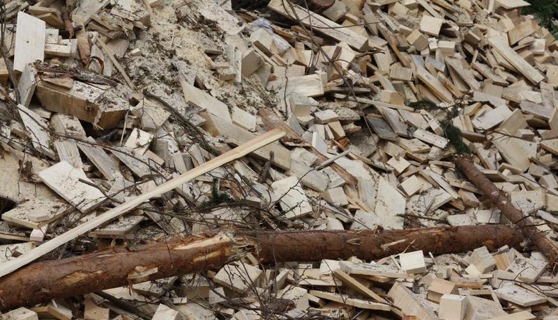 持続可能・再生可能資源の木質バイオマス、生成過程の定説を刷新