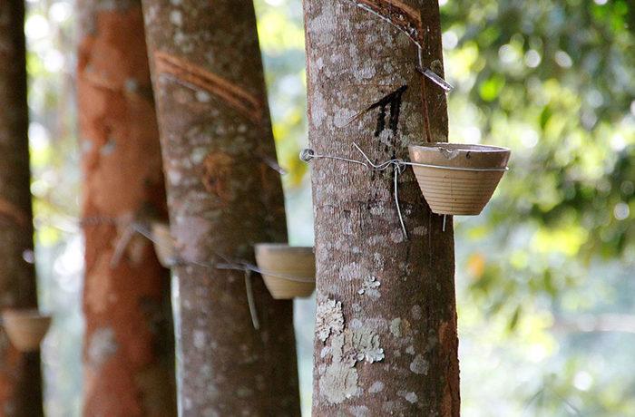 持続可能な天然ゴムのためのグローバルプラットフォーム設立