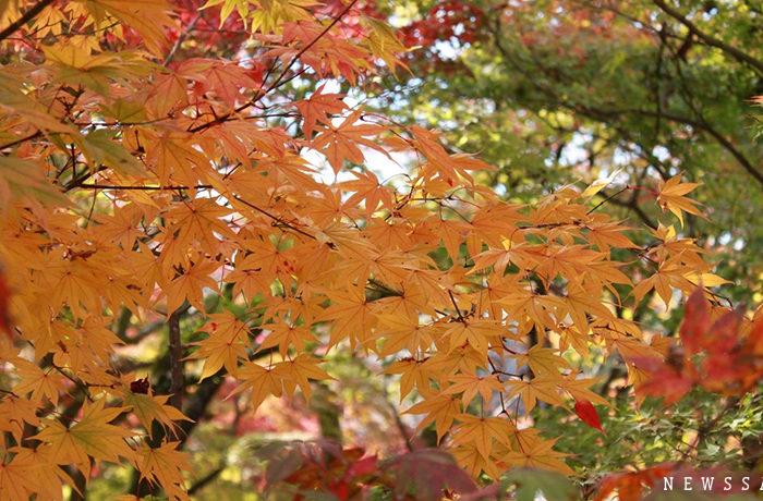 秋の京都、紅葉の見頃はこれから