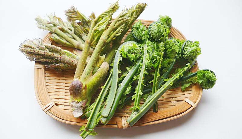 山菜・薬草の利用供給バランス調査 積雪量や森林面積で差