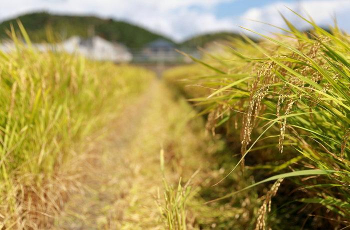 自然災害のリスクを回避する「農業共済」【ニュースのコトバ解説】