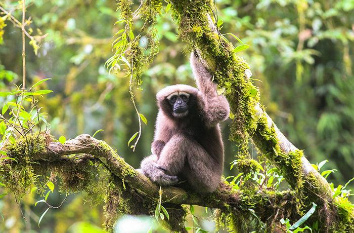 メコン川流域で157種の新種発見、環境保護へ警鐘 WWF