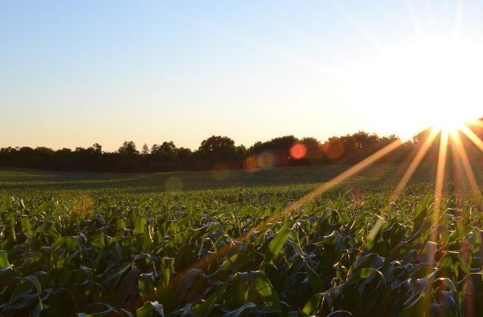 温暖化で主要穀物の収量減 全世界での被害額は年間4兆円