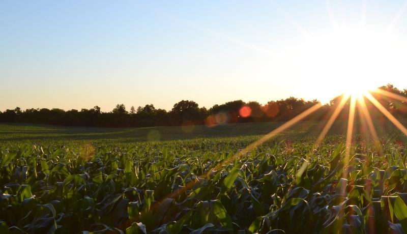 温暖化のため主要穀物の収量減 全世界での被害額は年間4兆円