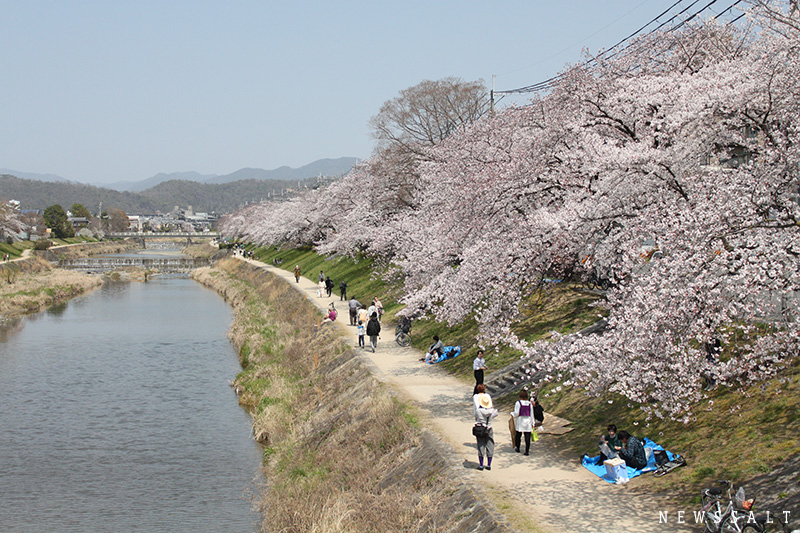 都内や西日本各名所で桜満開 花見客でにぎわう