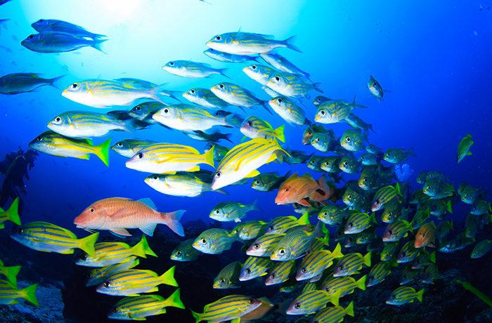 「魚」も相手の顔を見ている 霊長類以外の動物で世界初の検証
