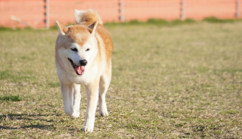 イヌも人に共感する!? ヒトとイヌの情動変化の関連を明らかに