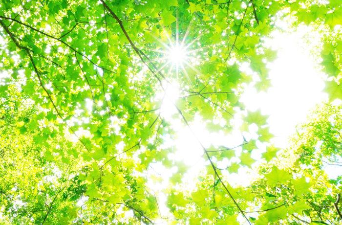 親子で学ぶ森林環境教育 小学生向け木育コンテンツを公開