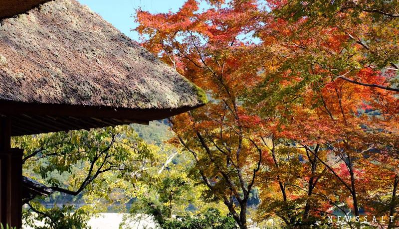 伊予の小京都「臥龍山荘」 紅葉が見ごろ