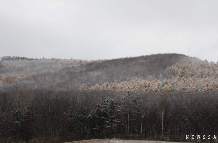 紅葉と雪の風景 北海道東川町の晩秋