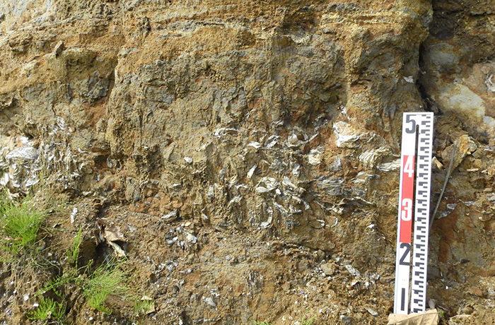 「チバニアン」が正式認定 日本の地名に由来した地質時代の名称が誕生