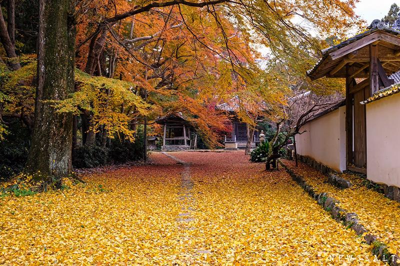 重要文化財の宝庫 大洲・如法寺で味わう紅葉の絶景