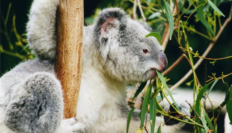 IUCNレッドリスト絶滅危惧種が3万種超える 気候変動の影響も