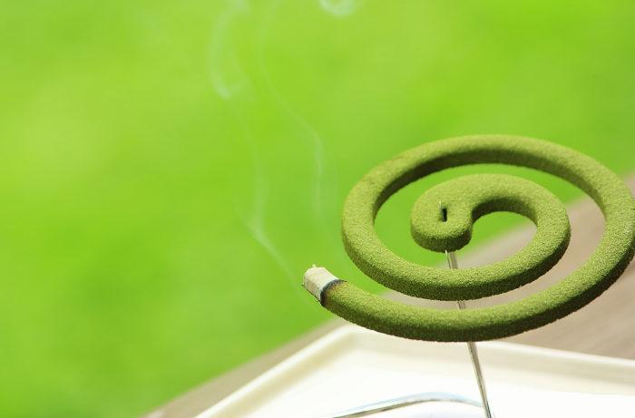 蚊取り線香の原料「除虫菊」のゲノム解読に成功 KINCHO