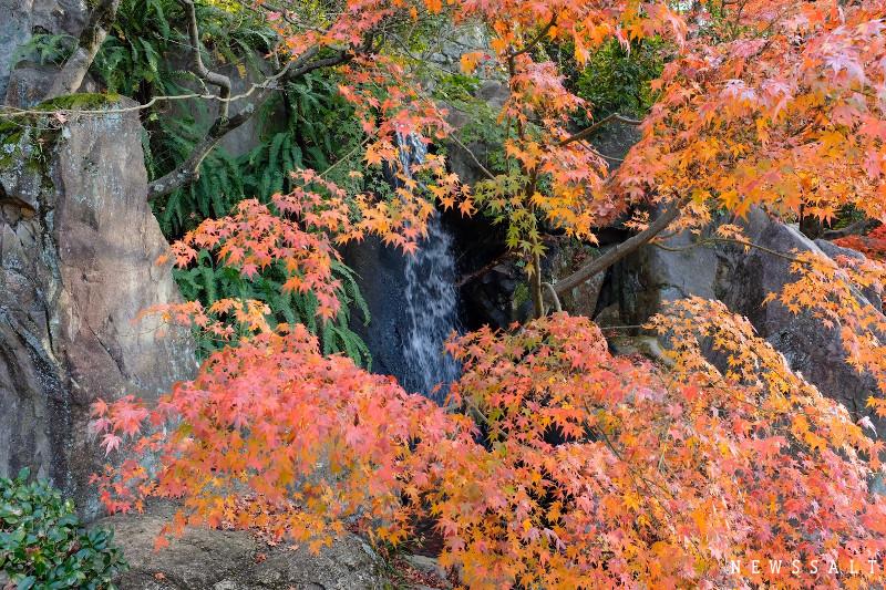 松山城二の丸史跡庭園、12月上旬には紅葉も