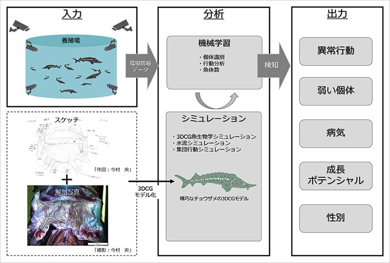 チョウザメのスマート養殖 北大とSBが共同研究プロジェクト開始