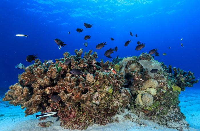 グレートバリアリーフの海洋熱波 人為的気候変動による影響を分析