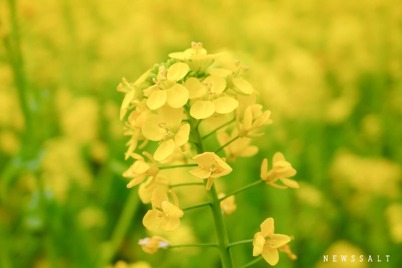 愛媛県東温市から一足早い春の便り
