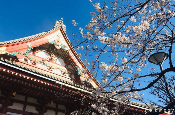 都内各所で桜が見頃を迎える 例年に比べて花見客は少なく