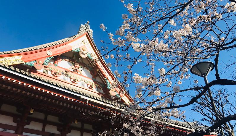 浅草寺(撮影日:3月20日)