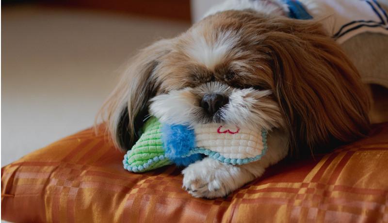 獣医師のペットのオンライン診療に対する意識調査 未導入が8割