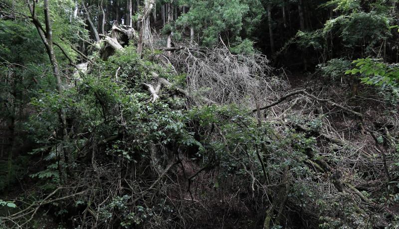 「台風は森林崩壊を引き起こす」北大などがメカニズムを解明